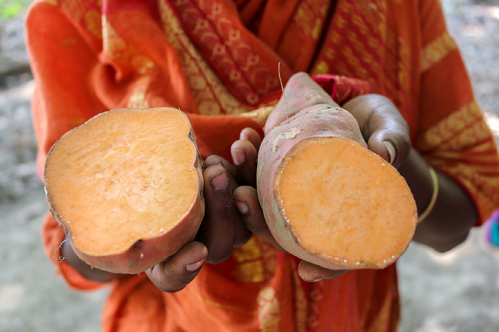 Sweet potato in hands. Photo credit: International Potato Center/ Sara Fajardo.